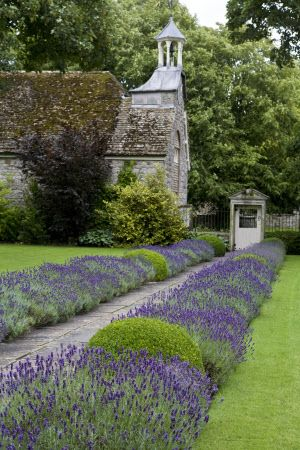 Lavender lined walkway in traditional English Country garden