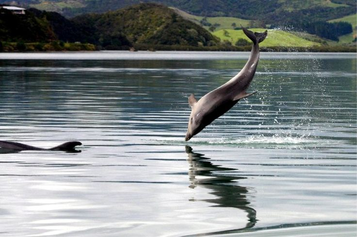 We have dolphins in the Harbour most days over the past 2 weeks :)