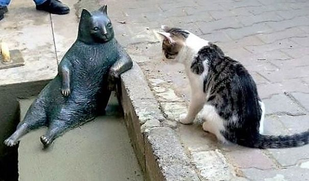 All cats are remembered by their owners, but few cats are remembered by the world. Everybody will remember the late and great Tombili however, because the famously laid-back feline just got immortalized with its very own statue.