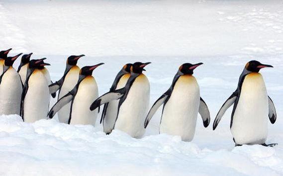 NON FATE I #PINGUINI!  Animali simpaticissimi i pinguini, ma hanno una particolarità: sono tutti #uguali. Trasponendo questo dato oggettivo nell'ambito imprenditoriale, otteniamo una similitudine. I pinguini, infatti, rappresentano le aziende troppo somiglianti tra loro. Stessi prodotti, stessi prezzi, stessi servizi. Quindi, cosa possiamo fare noi di fronte a un simile scenario?  Cliccate su #play e scopritelo!  #RicercaeFormazione