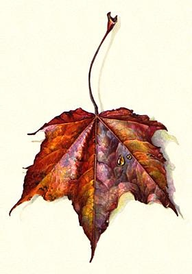 I want to start doing this. By Jean Emmons | American Society of Botanical Artists