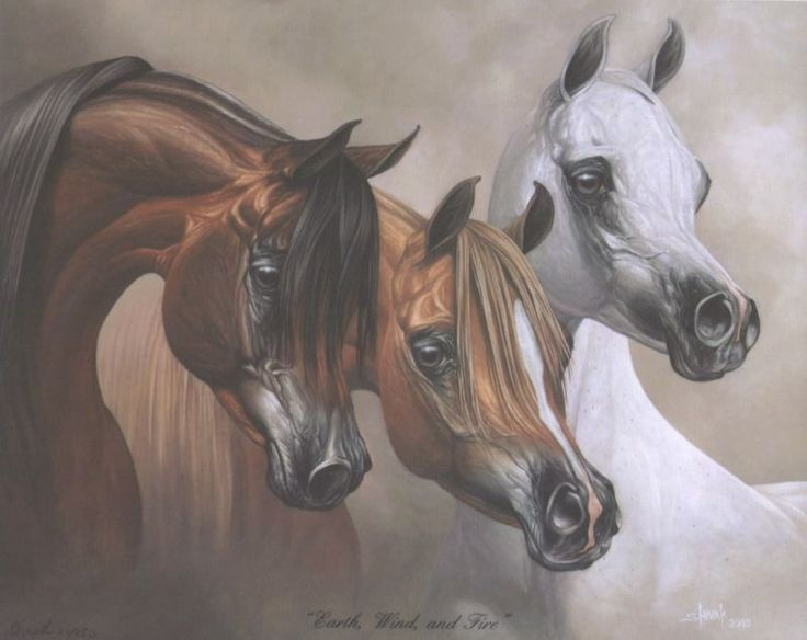Arabian Horse Images 17+ images abou...