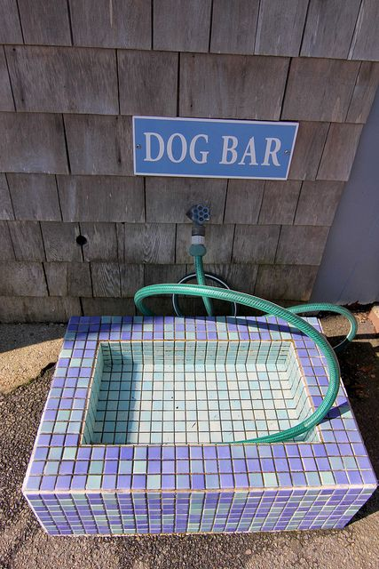 """Chatham on Cape Cod loves dogs. Where else can you find a """"Dog Bar""""?"""
