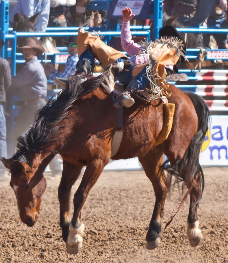 James Gordon Patterson Photography: La Fiesta de los Vaqueros! Tucson Rodeo Action from 18 February 2012