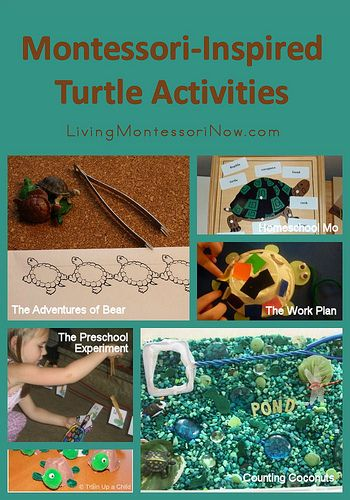 Montessori Learning: this is a great website for toddler & preschoolers. Montessori Monday  Montessori-Inspired Turtle Activities