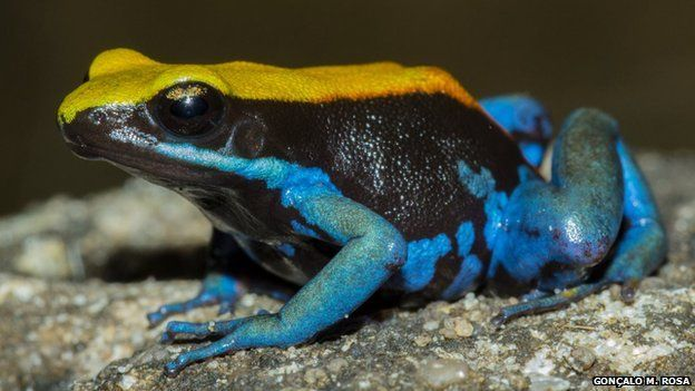 Madagascar is home to 500 frog species. Many of Madagascar's frogs are not found anywhere else in the world.  Book your travels through http://www.realmadagascar.com/
