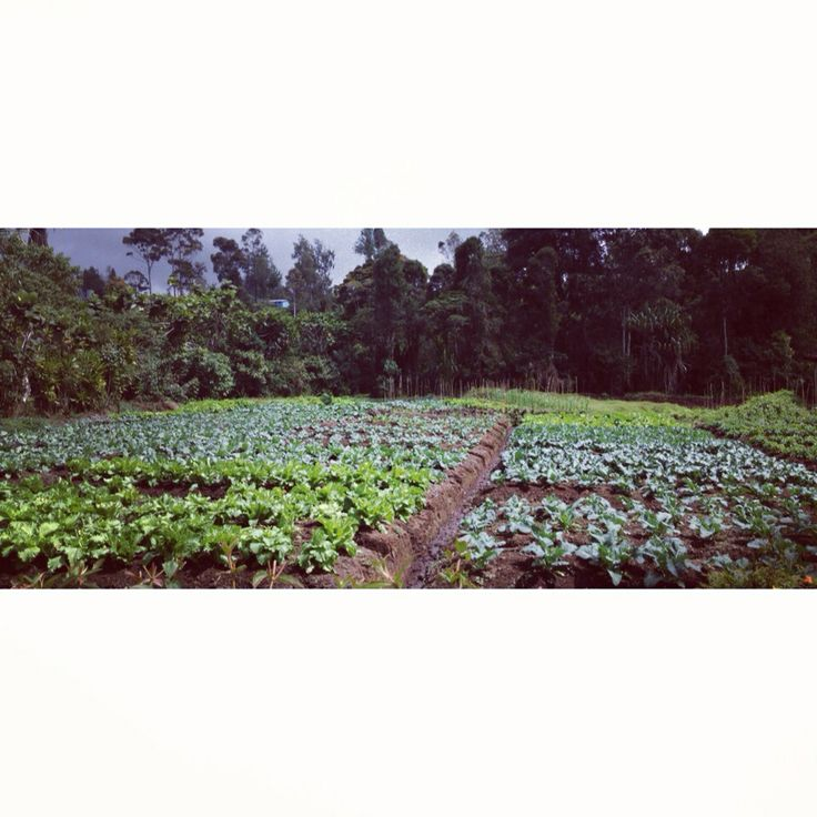 My Grandmother's Garden, Enga, Papua New Guinea