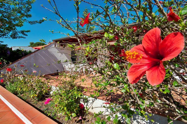 One of our garden, it seems like evergreen :)   #italy #sardinia #costarei #sardegna #travel #traveltips #viaggi #vacanze #holidays