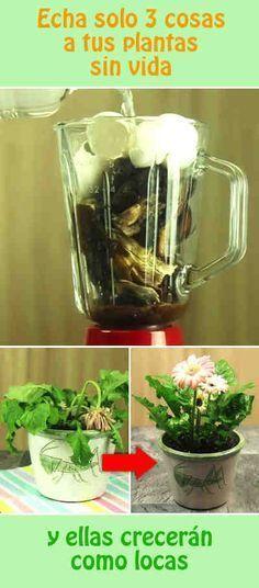 Echa solo 3 cosas a tus plantas sin vida, y ellas crecerán como locas #fertilizante #abono #plantas