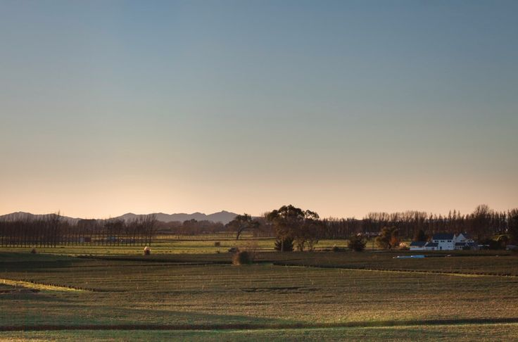 Sunset over Zealong Tea Estate, New Zealand