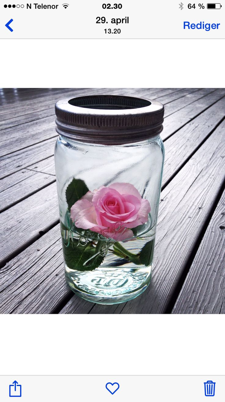 Bilde tatt i 2014. Norgesglass med rose