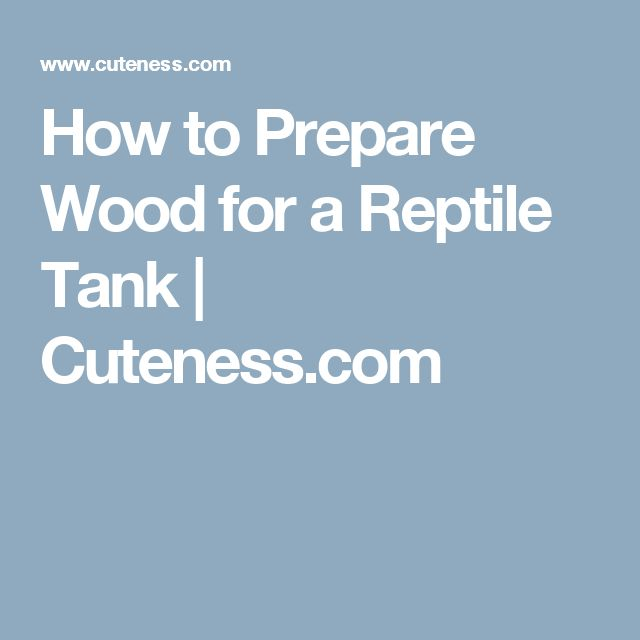 How to Prepare Wood for a Reptile Tank | Cuteness.com