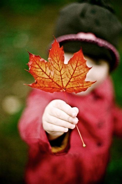 / :: Autumn ::