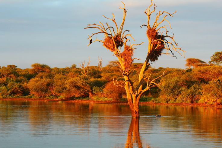 Kruger National Park South Africa, if you wish to visit us, contact me at krugerdrives@gmail.com.