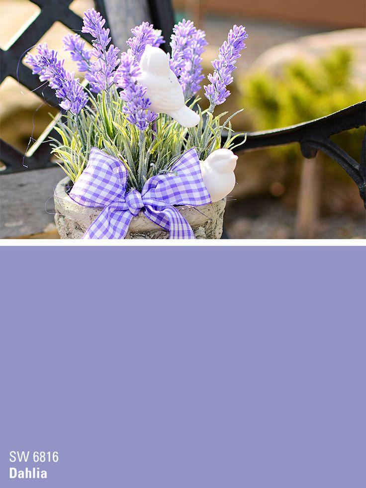 Sherwin-Williams purple paint color - Dahlia (SW 6816)