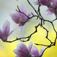 Spring Blossoms' March by catalin66ro on SoundCloud