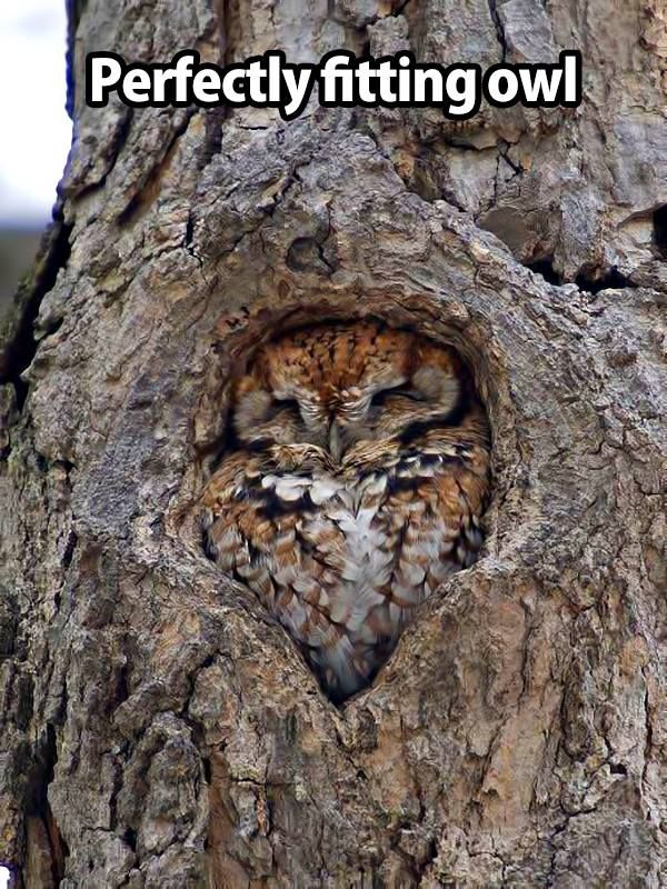 Perfect Owl shelter