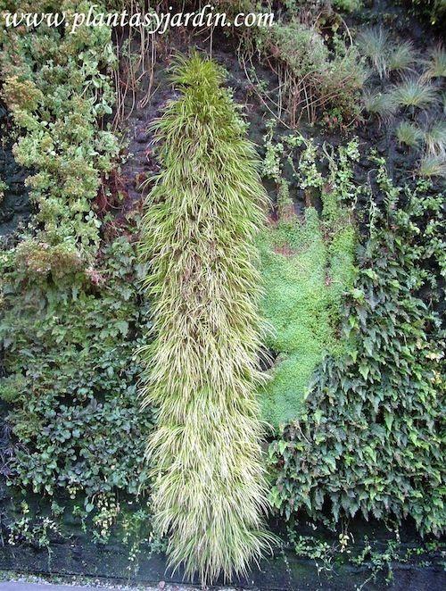 Mejores 1003 im genes de jardines verticales en pinterest - Plantas para jardines verticales ...