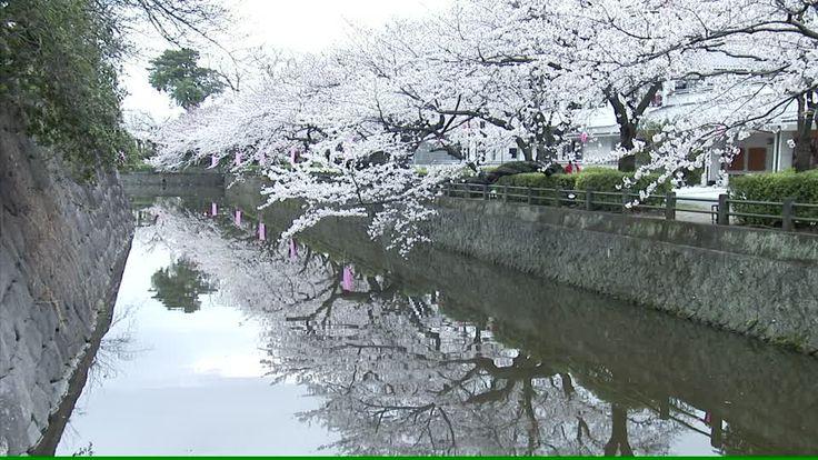 This high-quality Royalty Free HD Stock Shot about Odawara, Castle Wall, Moat, Stonewall, Sakura, Cherry Tree, Light Reflection,…