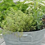 Tips on Organic Container Gardening from Pete Bottomley: Organic Herb Container Garden
