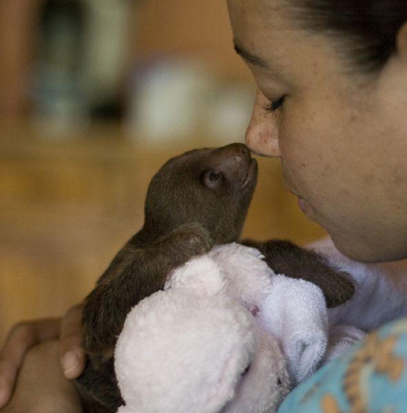 111 Adorable Baby Sloths