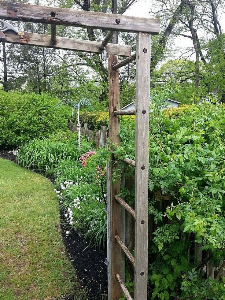 Re-purposed Ladder Becomes Trellis We've had an old wooden ladder leaning up against a fence behind a row of trees in our back yard for several years. When we had the trees (diseased) cut down we found it and saw that It had some rot but was otherwise in good condition. My wife thought that it could be made into a unique trellis, sketched it, and appointed me the carpenter.