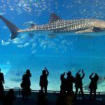 World's 10 Most Amazing Aquariums That Will Make You Wish You Were A Fish