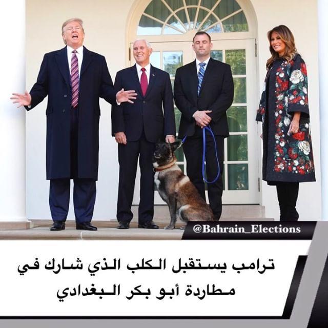 بالصور ترامب يستقبل الكلب الذي شارك في مطاردة أبو بكر البغدادي استقبل الرئيس الأمريكي دونالد ترامب اليوم الاثنين ضيفا غير عادي في البيت الأب Animals Dogs