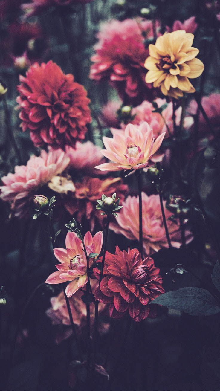 Colors | Flowers | wallpapers | iPhone