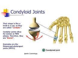 Image result for condylar joint   ASR Basic Anatomy