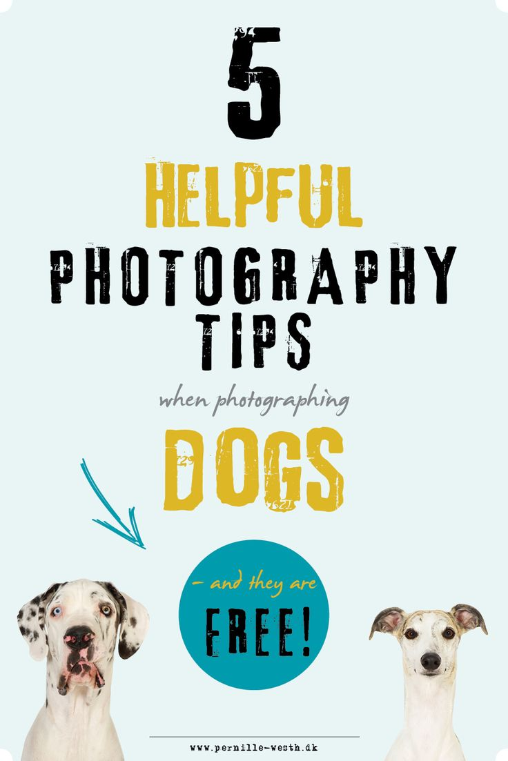 DOG PHOTOGRAPHY! I love to photograph dogs; they make so many cute, funny, and adorable expressions that make great photos! I have written down 5 of my basic photography tips to use when photographing dogs - you can get them for free here; http://pw5383.wixsite.com/photographytipsdogs. Photo tips!