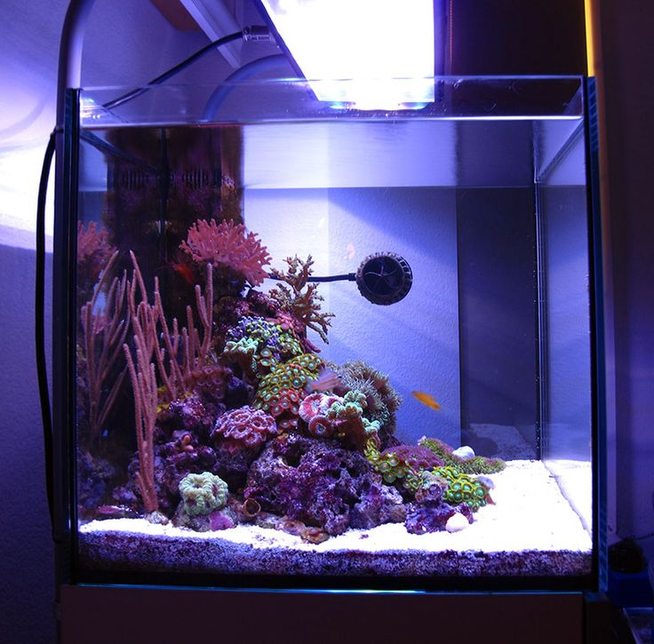 144 best ideas about reef scape inspiration on pinterest for Aquarium recifal nano