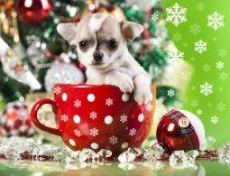 Новый год Собаки Щенок Чихуахуа Кружка Животные