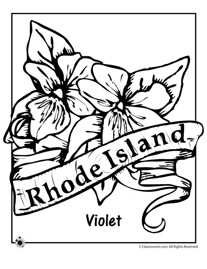 State Flower Coloring Pages Rhode Island Page Classroom Jr
