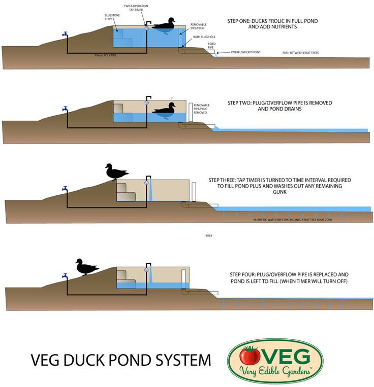 339 best images about chickens on pinterest the chicken for Design of a pond system