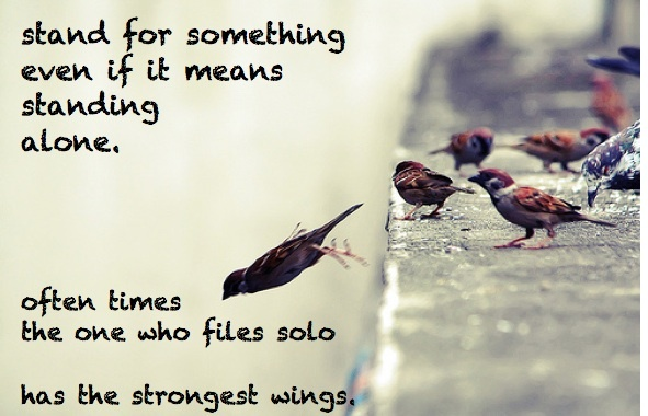 Fly Solo Birds Quotes Inspiration Inspirations Idolations