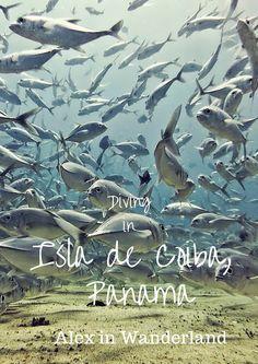 Diving paradise: Isla de Coiba, Panama