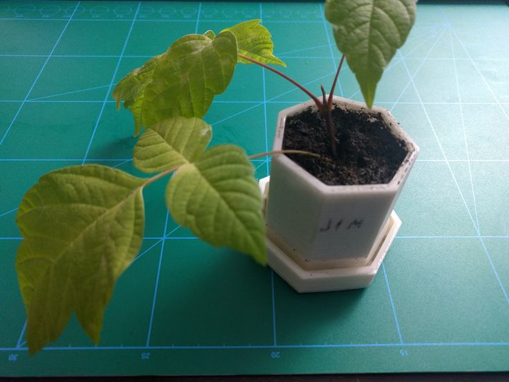 The heptagonal planter and tray tested.