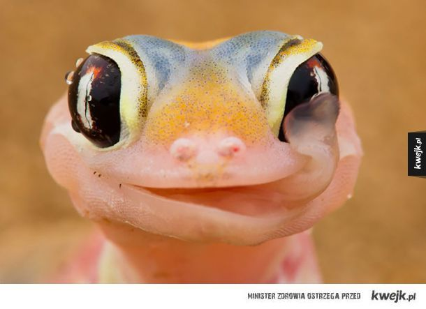 Lizard *.* #animal #lizard #cute #nature