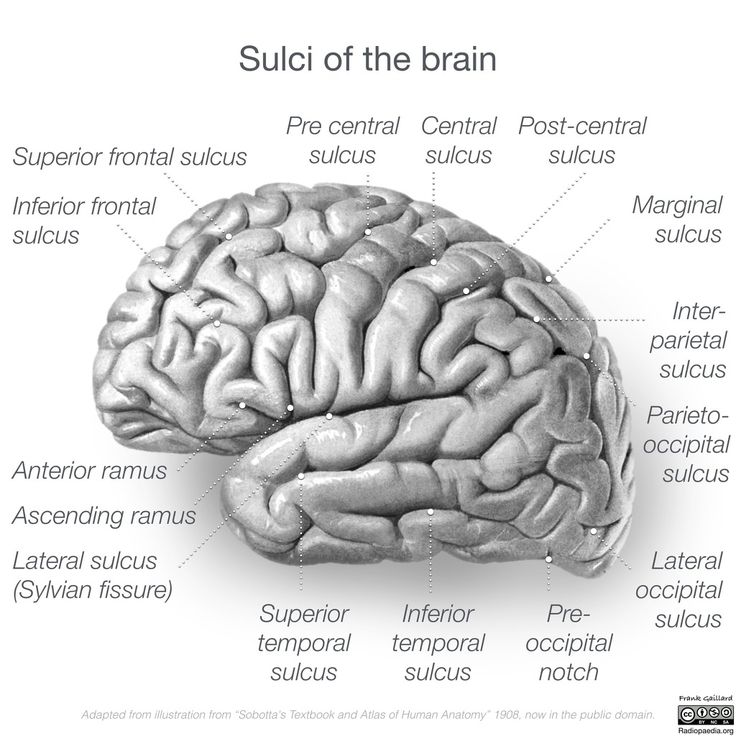 analysis of the occipital lobe The frontal, temporal, parietal, and occipital lobes cover the brain's surface (see  figure: lobes of the brain) the insula is hidden under the sylvian fissure.