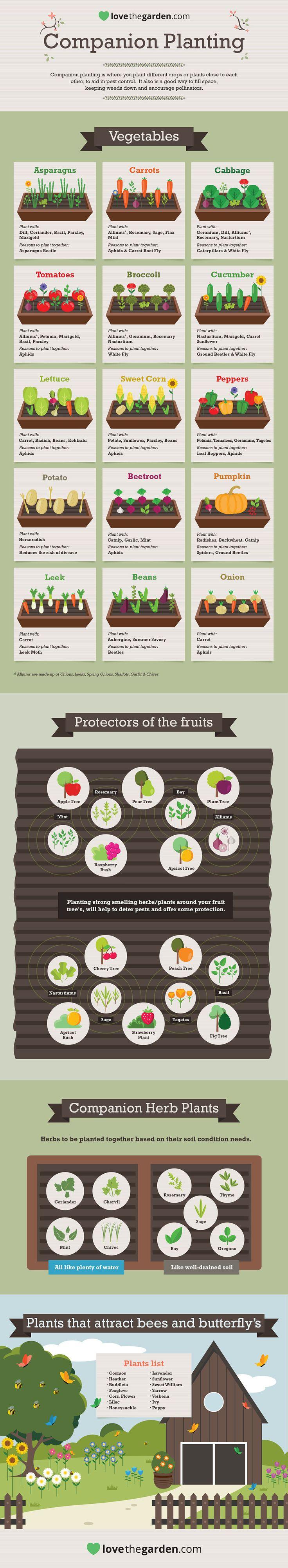 Companion planting infographic