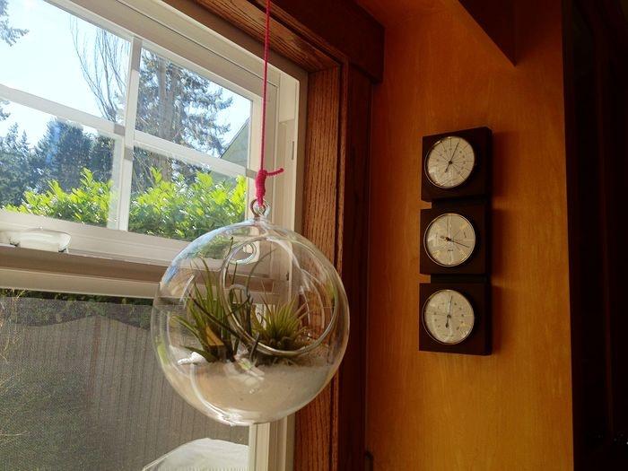 Hangman's knot for hanging glass terrariums.
