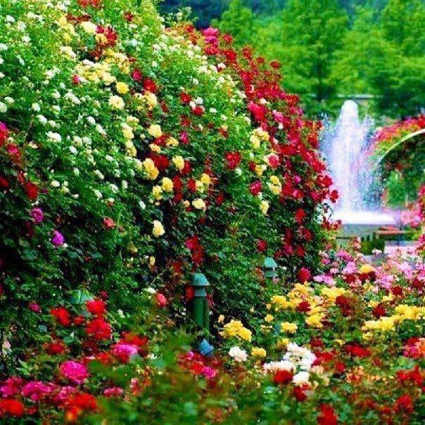 Beautiful Flowers Roses Garden Wwwimgkidcom The