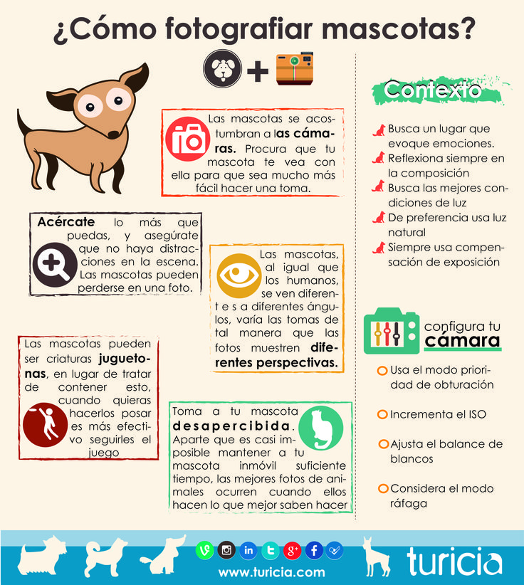 Turicia.com | BLOG TURICIA | ¿Cómo fotografiar mascotas? Infografía | Fotografia profesional, accesorios fotograficos y equipos de iluminacion para mayoristas en Mexico