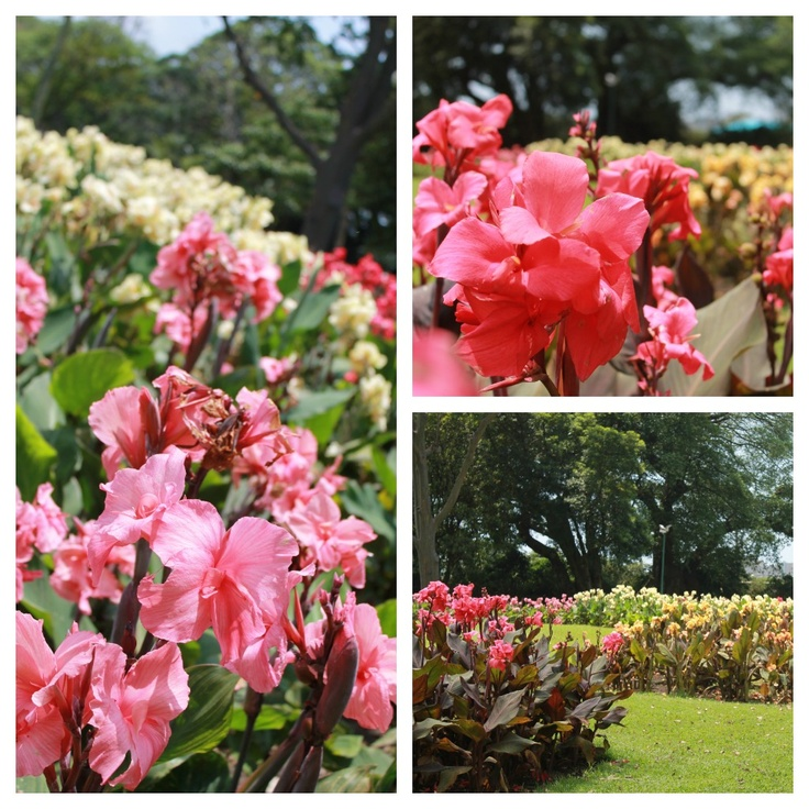 The plants are stunning - whenever you choose to visit ...