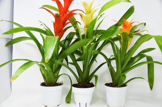 Best Artificial 3ft 90cm PARLOUR PALM Tree Tropical PLANT Office Conservatory