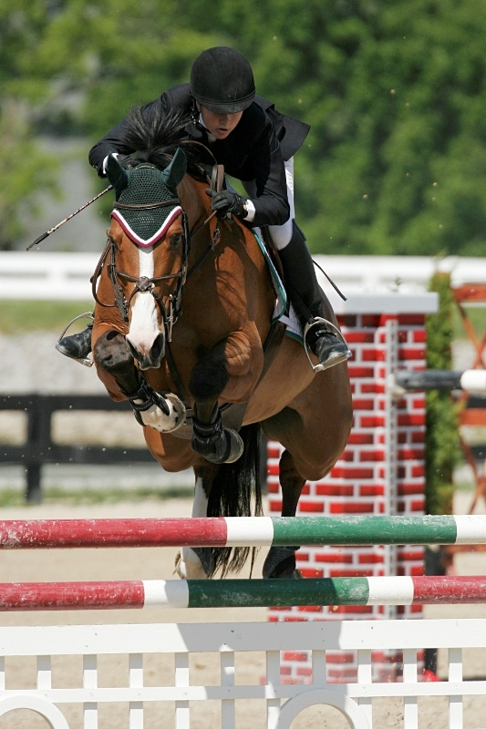30 Best Horse Play In The Palm Beaches Images On Pinterest