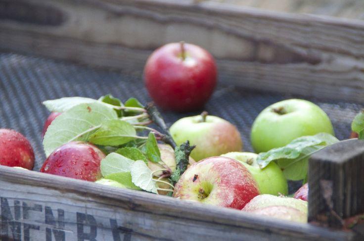Opskrift på Glutenfri Æblekage med crumble
