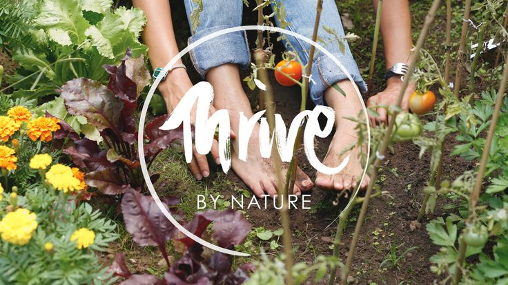 Thrive by Nature with Olivia Julietta ::: photo by: Elizabeth May Kinnaird
