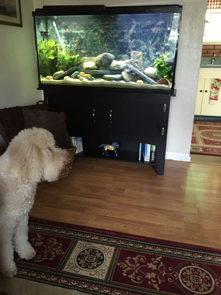 Top 25 Ideas About 30 Gallon Fish Tank On Pinterest